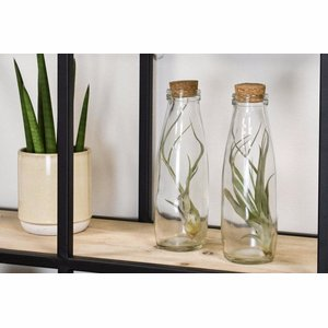 Tillandsia - Milk bottle - Large
